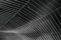 spider_web-1